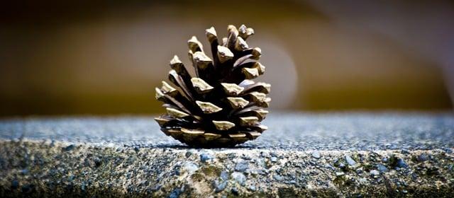 Pinecone on ledge