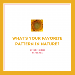 Patterns-in-Nature