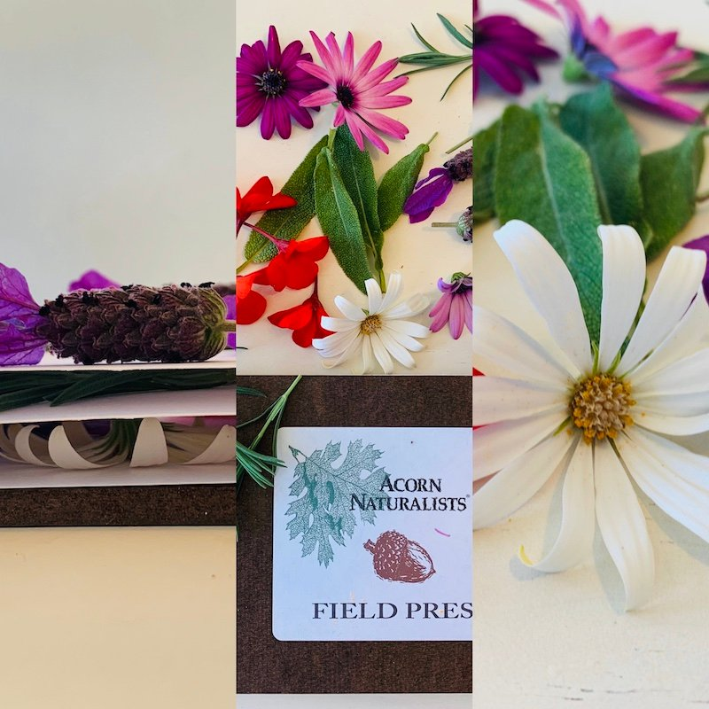 Acorn Naturalists Field Press and flowers for plant press