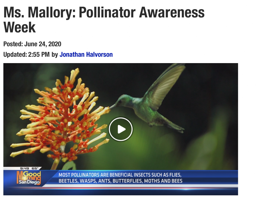 Link to Pollinator Awareness Week from KUSI