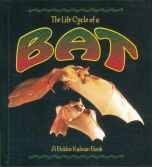Life Cycle of a Bat