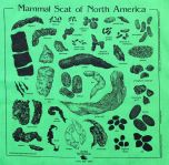 Lime Green Scat Scarf (Acorn Naturalists' Identification Bandana)