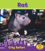Rat (City Safari Series)
