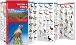 Arizona Birds (Pocket Naturalist® Guide)