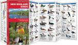 New England Birds (Pocket Naturalist® Guide)