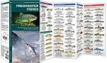 Freshwater Fishes (Pocket Naturalist® Guide)