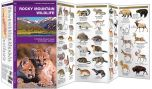 Rocky Mountain Wildlife (Pocket Naturalist® Guide)