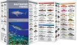 Saltwater Fishes (Pocket Naturalist® Guide)