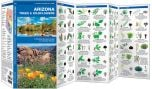 Arizona Trees & Wildflowers (Pocket Naturalist® Guide)