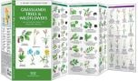Grassland Trees & Wildflowers (Pocket Naturalist® Guide)