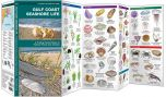 Gulf Coast Seashore Life (Pocket Naturalist® Guide)