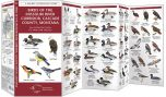 Birds of the Missouri River Corridor, Cascade County, Montana (Pocket Naturalist® Guide)