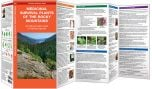 Medicinal Plants of the Rocky Mountains (Pocket Naturalist® Guide)