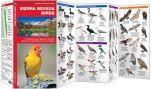 Sierra Nevada Birds (Pocket Naturalist® Guide)