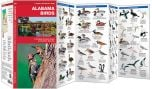 Alabama Birds (Pocket Naturalist® Guide)