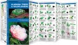 Alabama Trees & Wildflowers (Pocket Naturalist® Guide)