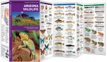 Arizona Wildlife (Pocket Naturalist® Guide)