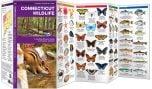 Connecticut Wildlife (Pocket Naturalist® Guide)