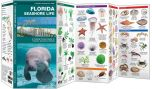 Florida Seashore Life (Pocket Naturalist® Guide)