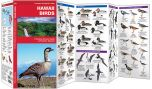 Hawaii Birds (Pocket Naturalist® Guide)