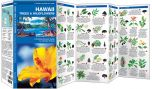 Hawaii Trees & Wildflowers (Pocket Naturalist® Guide)