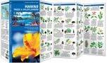 Hawaii Trees & Wildflowers (Pocket Naturalist® Guide)