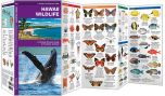 Hawaii Wildlife (Pocket Naturalist® Guide)