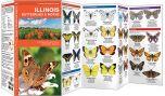 Illinois Butterflies & Moths (Pocket Naturalist® Guide)