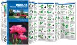 Indiana Trees & Wildflowers (Pocket Naturalist® Guide).