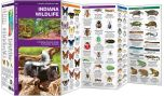 Indiana Wildlife (Pocket Naturalist® Guide)