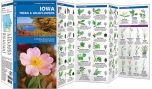 Iowa Trees & Wildflowers (Pocket Naturalist® Guide)