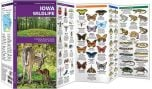 Iowa Wildlife (Pocket Naturalist® Guide)