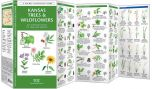 Kansas Trees & Wildflowers (Pocket Naturalist® Guide)