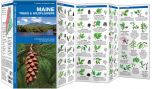 Maine Trees & Wildflowers (Pocket Naturalist® Guide)