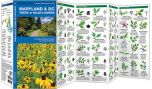 Maryland & DC Trees & Wildflowers (Pocket Naturalist® Guide)