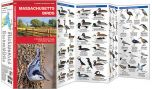 Massachusetts Birds (Pocket Naturalist® Guide)