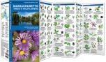 Massachusetts Trees & Wildflowers (Pocket Naturalist® Guide)