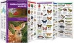 Massachusetts Wildlife (Pocket Naturalist® Guide)