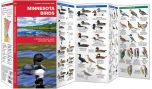 Minnesota Birds (Pocket Naturalist® Guide)