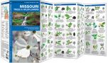 Missouri Trees & Wildflowers (Pocket Naturalist® Guide)