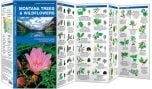 Montana Trees & Wildflowers (Pocket Naturalist® Guide)