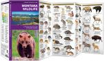 Montana Wildlife (Pocket Naturalist® Guide)
