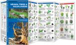 Nevada Trees & Wildflowers (Pocket Naturalist® Guide)