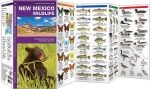 New Mexico Wildlife (Pocket Naturalist® Guide)