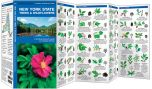 New York State Trees & Wildflowers (Pocket Naturalist® Guide)