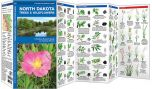 North Dakota Trees & Wildflowers (Pocket Naturalist® Guide)