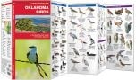 Oklahoma Birds (Pocket Naturalist® Guide)