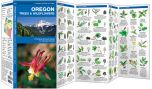 Oregon Trees & Wildflowers (Pocket Naturalist® Guide)
