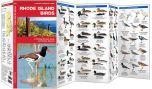 Rhode Island Birds (Pocket Naturalist® Guide)
