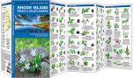 Rhode Island Trees & Wildflowers (Pocket Naturalist® Guide)